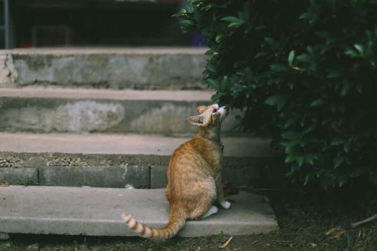 Eine rote Katze sitzt auf einem Treppenstein