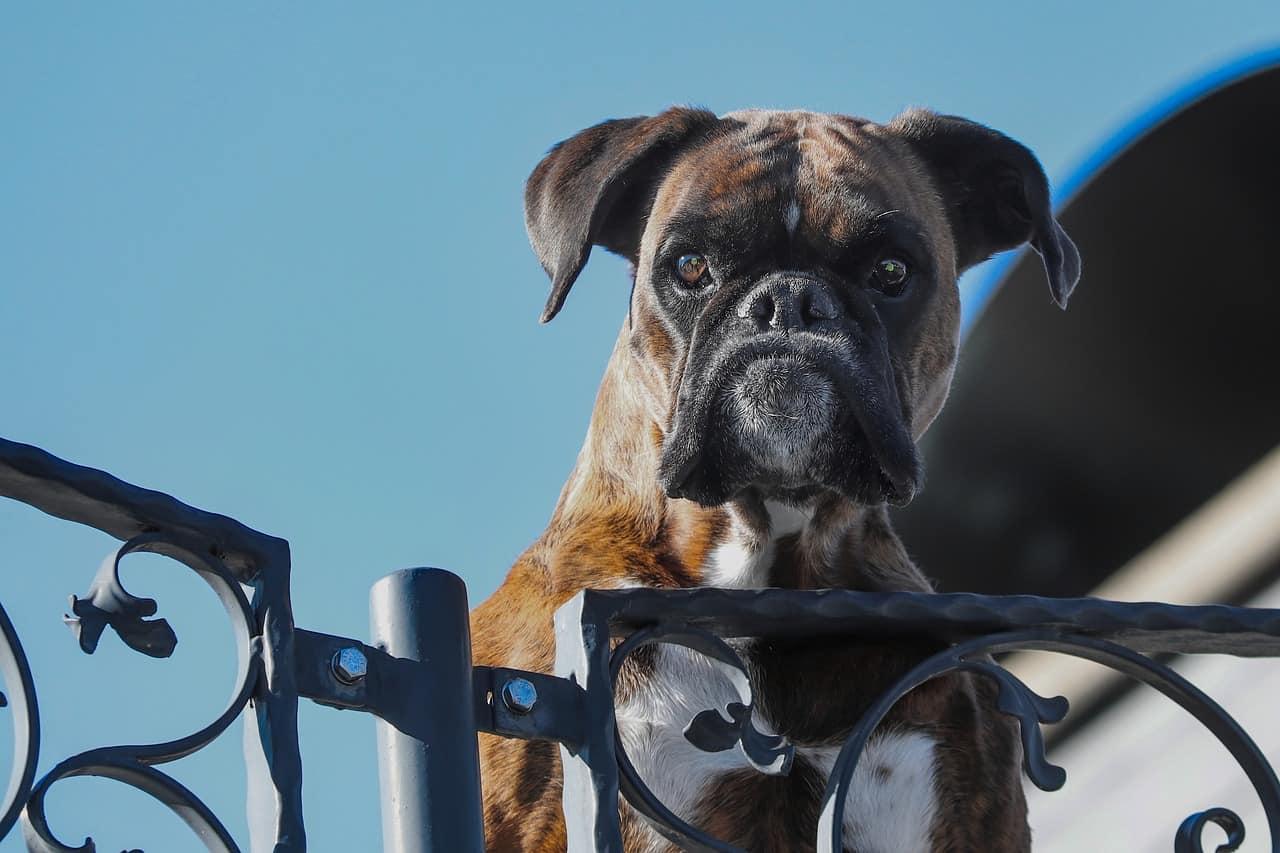 Elektronischer Wachhund: Test & Empfehlungen (10/20)