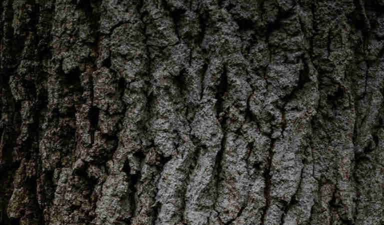 Boxspringbett Holz-2